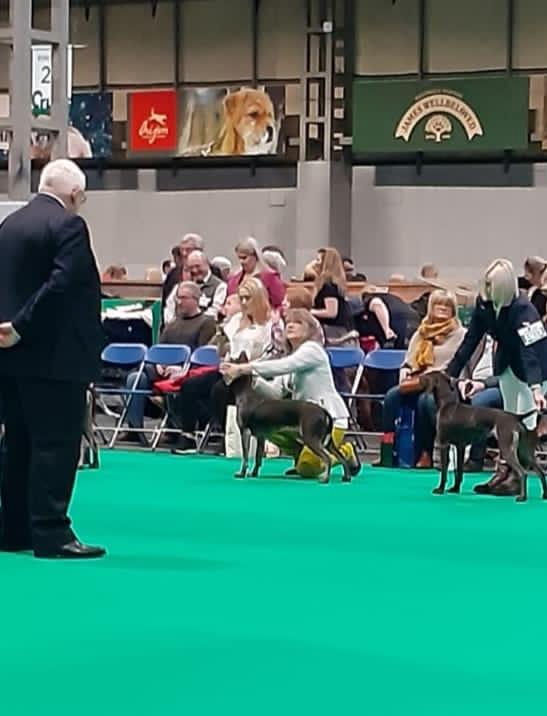 Dog Obedience training crufts