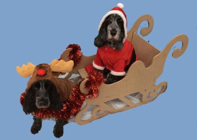York City Dog Training Club - Christmas Fancy Dress Party