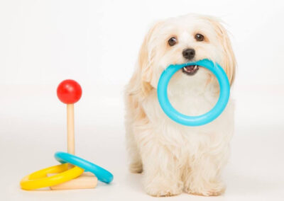 York City Dog Training Club - Tricks Workshop
