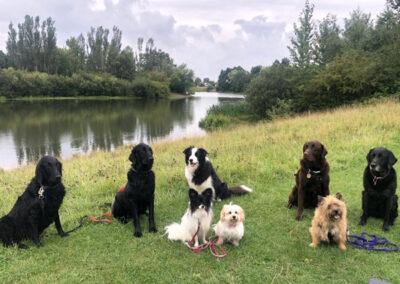 A dog walk to Rawcliffe lake, York