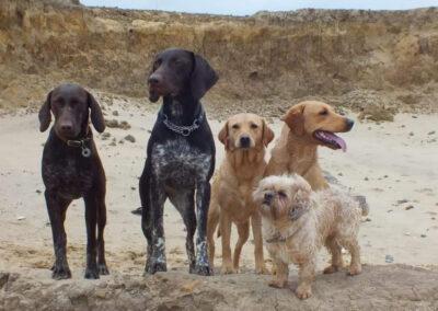 York Dog Training Club outing - a romp on the beach