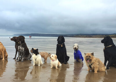 The dogs training club's favourite outing to Hunmanby Beach